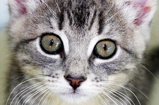 Top 10 Namen Van Katten
