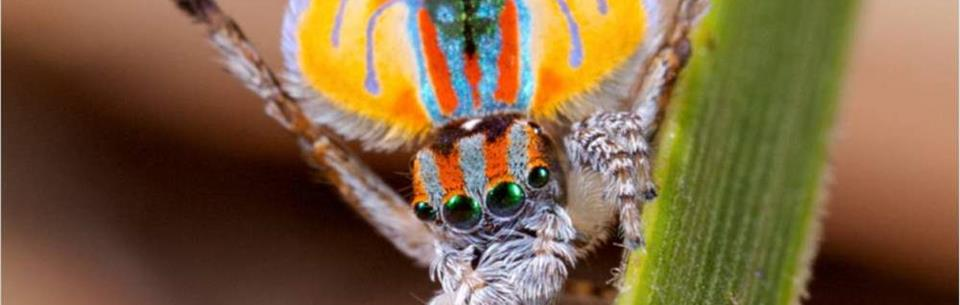 Top 10 Coolste Spinnen Ter Wereld